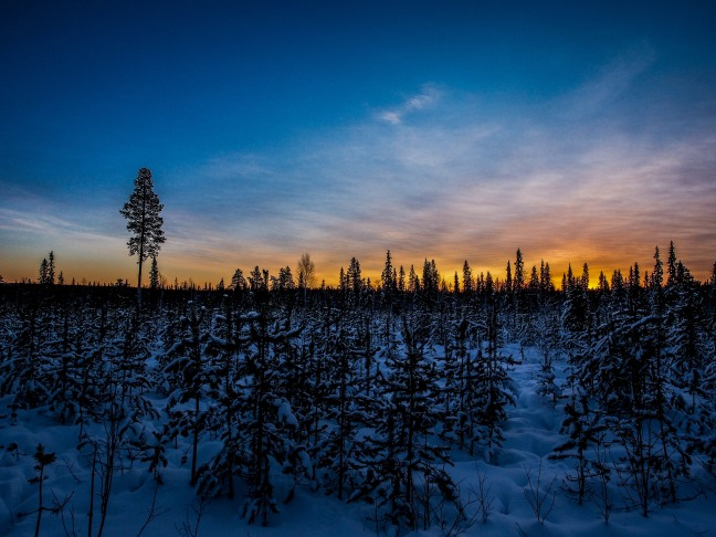 Sunshine in Lapland in December