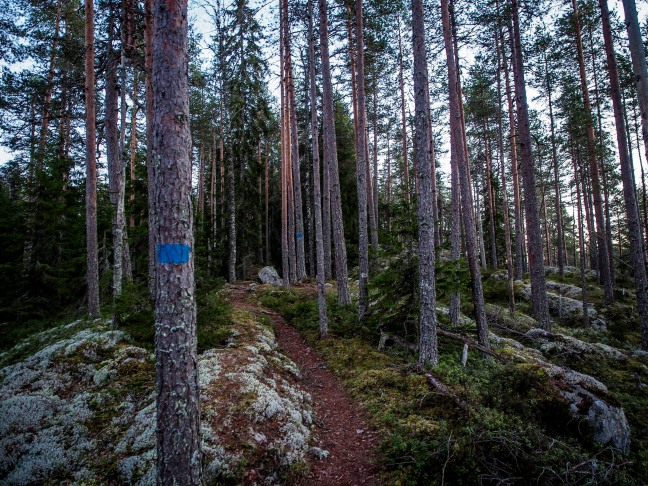 Hiking trail in Isojärvi National Park