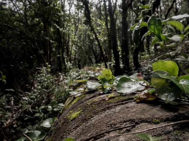 Hiking in the La Orotava valley