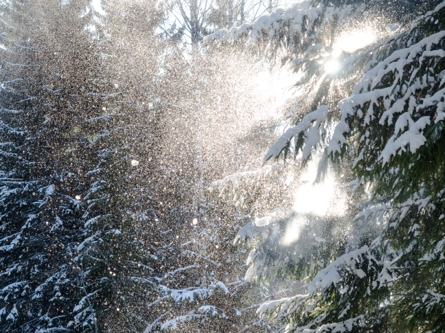 Snow falling from a tree