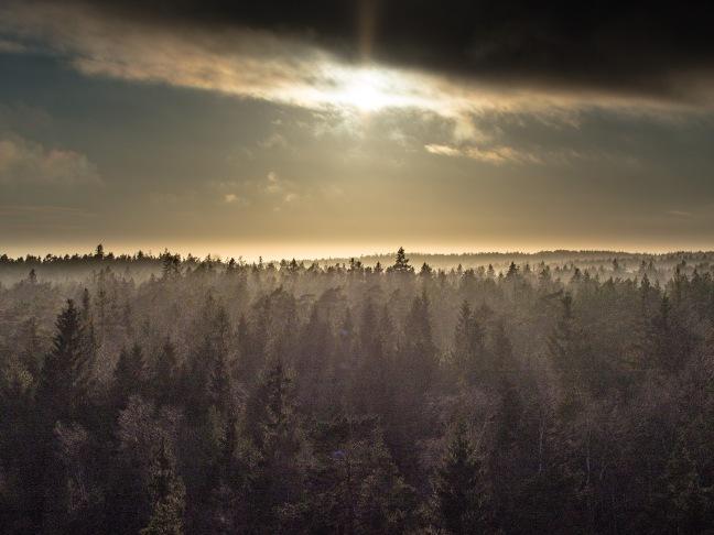 Sunshine in Porkkala, Finland.