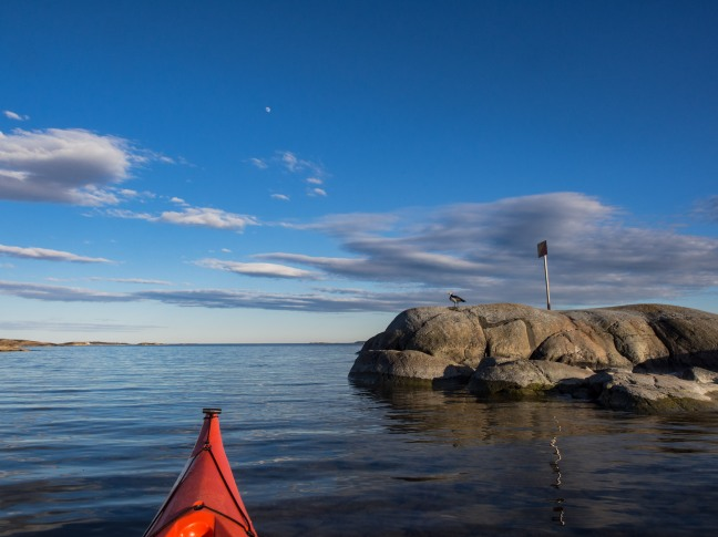 A kayak and a goose in Helsinki archipelago